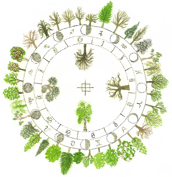 Horoscop / Zodiac Arboricol