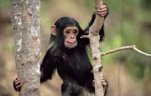Femeia si maimuta
